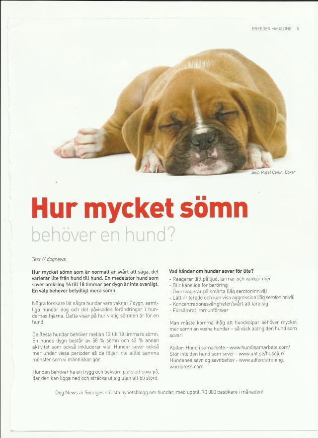 sömnhund.jpg