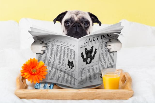 dognewsbild