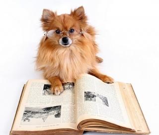 dognewsbild2