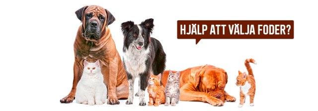 fodervaljare-guide-till-att-valja-foder-for-hund-och-katt-granngarden-1140x400