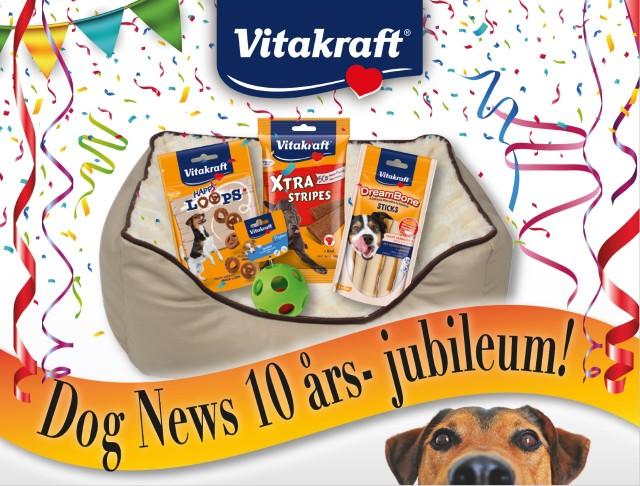 dognews10ar