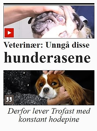 VG.jpg